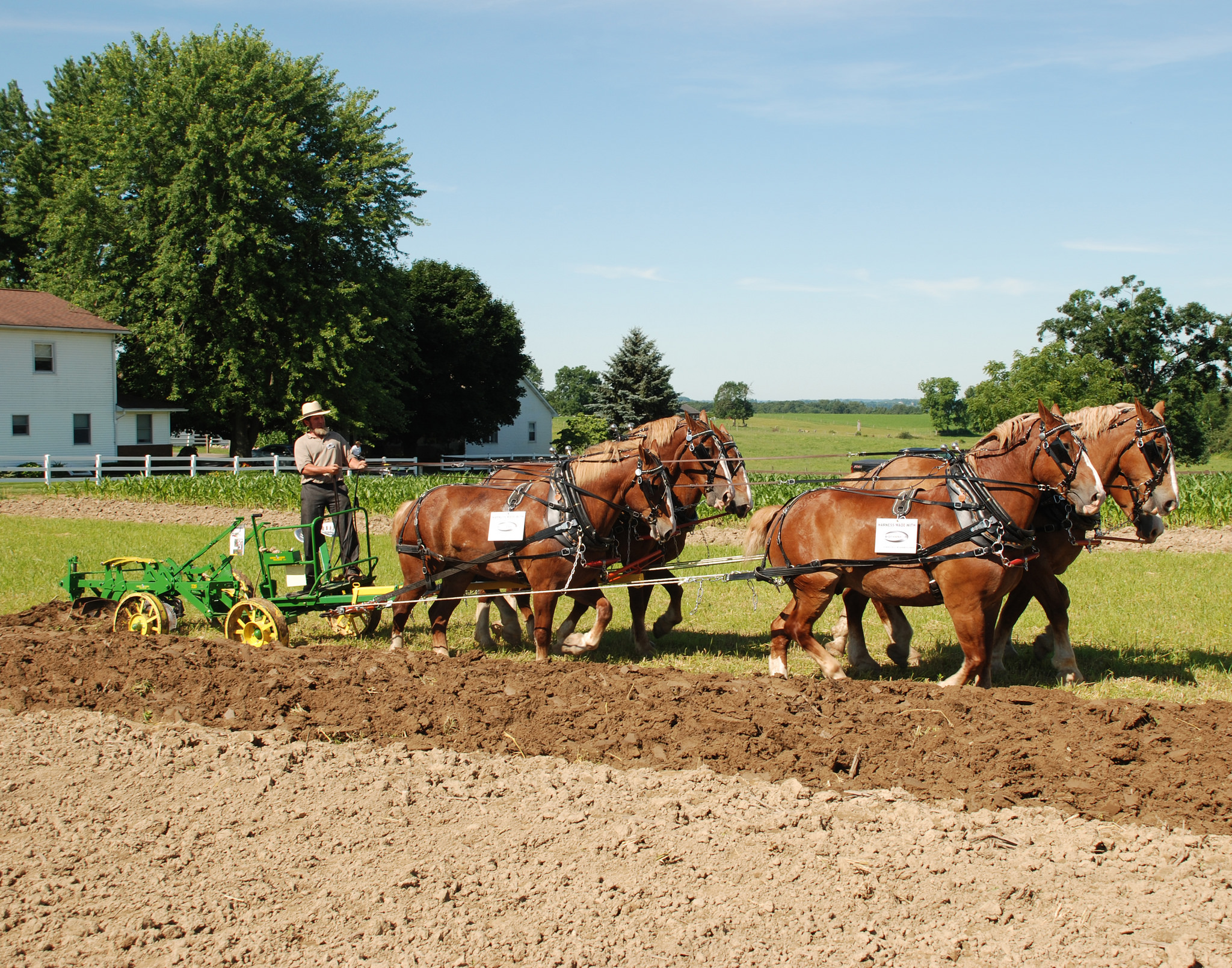An Amish gentleman plowing land with a team of horses.